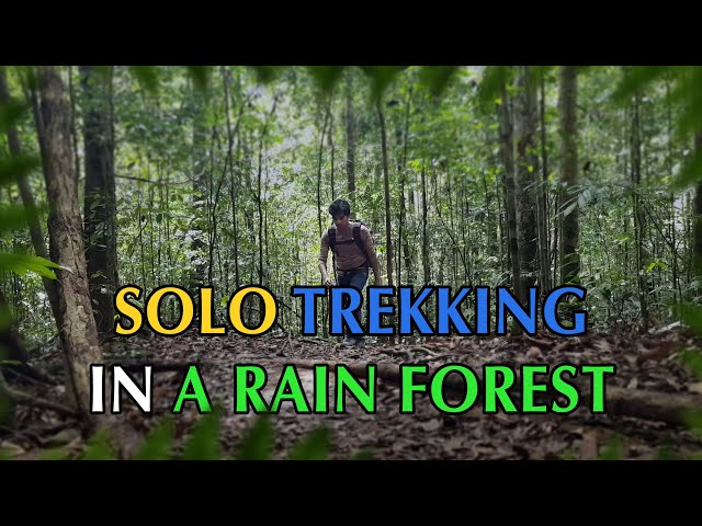 Solo trekking in a rain forest.