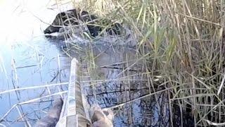wild boar hunting hog полювання на кабана охота на кабана Wildschweinjagd