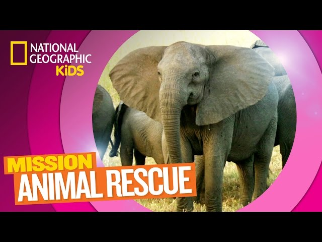 Elephants and How to Save Them