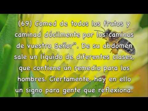 Sura An-Nahl, Las abejas Subtítulos Español Mishary Rashed Alafasy