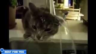 Свежая подборка приколов с котами