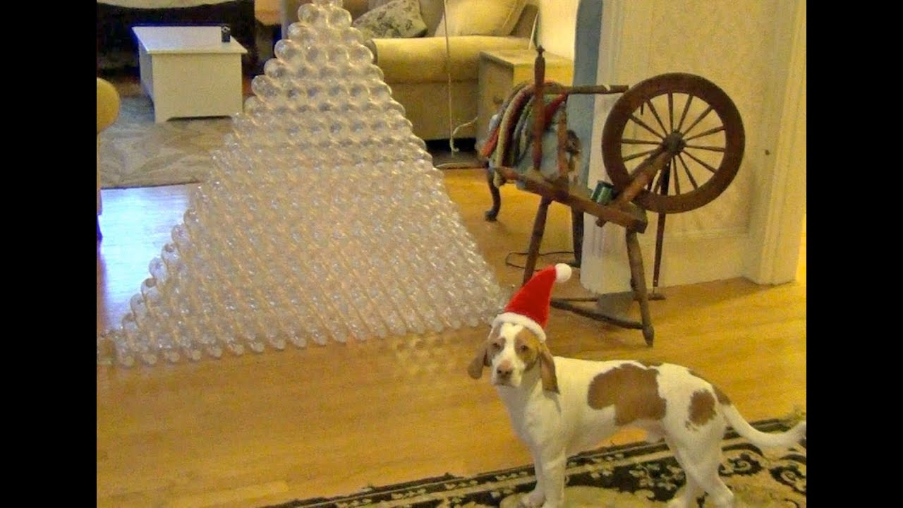 This Dog Is Having The Best Christmas Ever