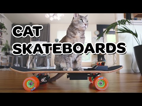 Build Your Cat an Electric Skateboard