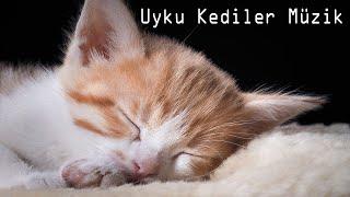 Uyku Kediler Müzik - Rahatlatıcı