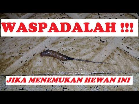 A meztelen csigák paraziták