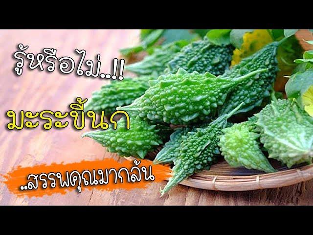 มะระขี้นก หวานเป็นลม ขมเป็นยา สมุนไพรไทยสรรพคุณเกินคาด!!!