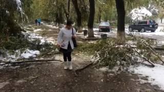 Тараз, упавшие деревья