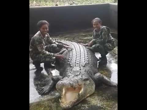 Almost bite by crocodile