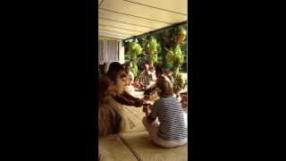 preview picture of video 'Veronica Le-Bert participating in a Kava ceremony at Nukubalavu Village'