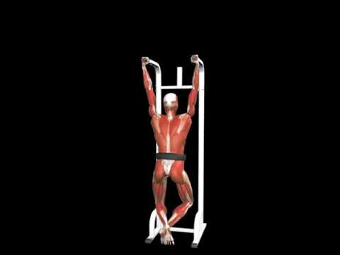 Cable Parallel Grip Pull-up