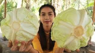 Yummy cooking cabbage with fish ball recipe - Cooking skill