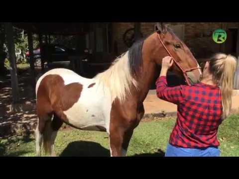 O mercado de cavalos campolina é crescente