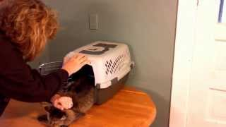 E-Z Out Cat Carrier