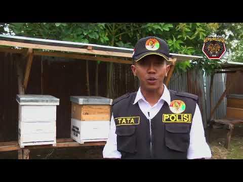 Binmas Noken Bina Peternakan Lebah Madu di Kabupaten Jayawijaya