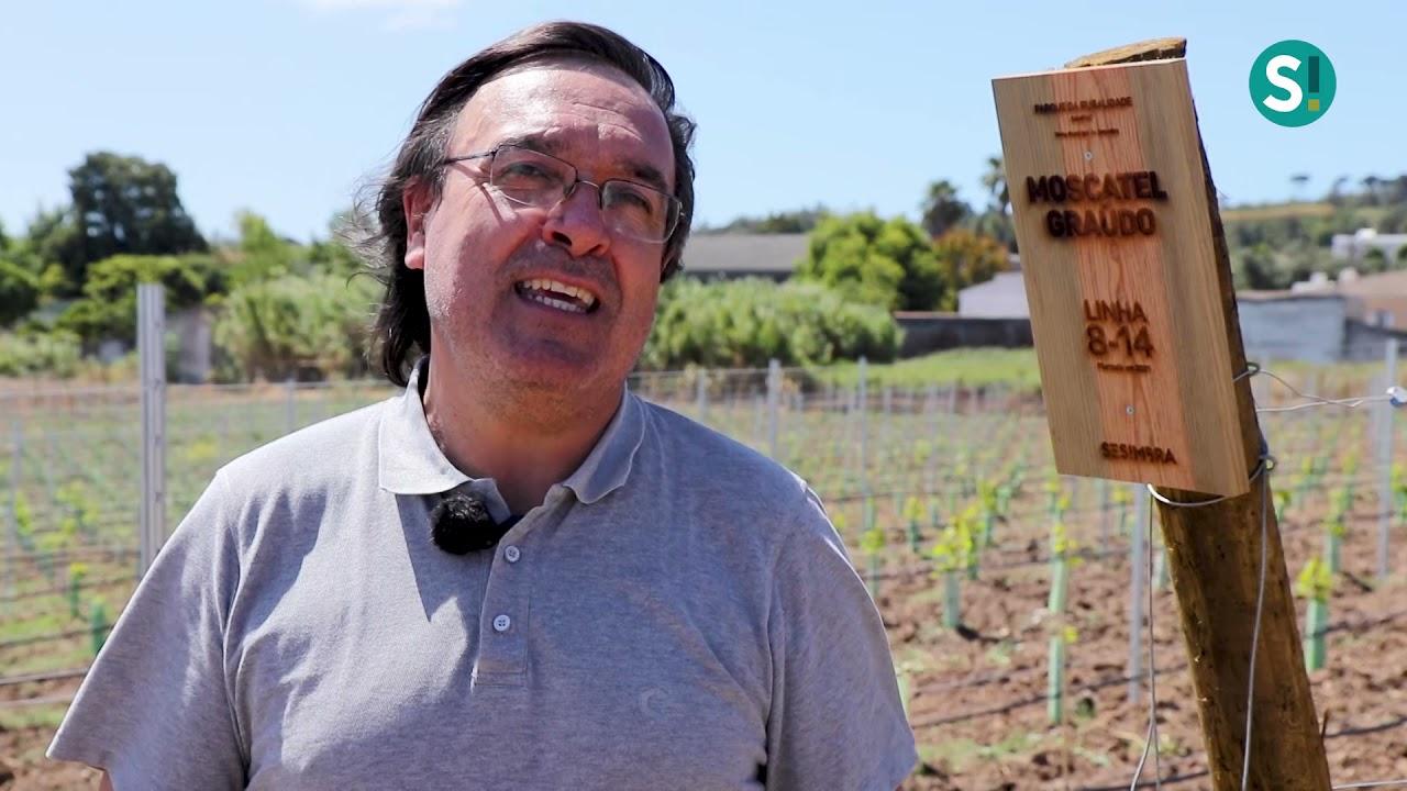 Dia Nacional do Vinho assinalado em Sesimbra com a inauguração da Vinha de Sampaio