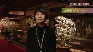 【アミンチュニュース】長浜盆梅展