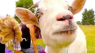 Goat Yoga THE LIST!