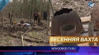 В Новгородской области начались масштабные поисковые работы
