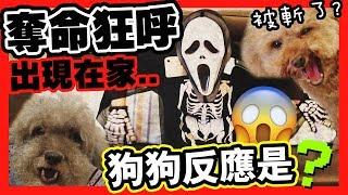 【👻萬聖節首播】家中出現「奪命狂呼」!狗狗被斬頭了?😱(中字)