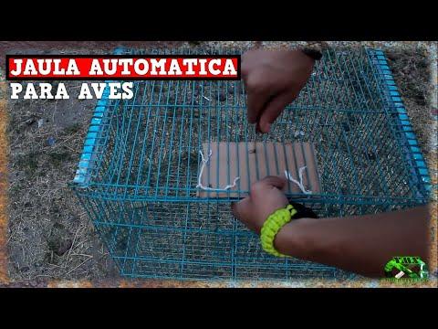 Trampa JAULA Automática Para AVES AUTOMATICA Y CASERA| TUTORIAL| YMX SUPERVIVENCIA