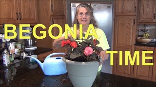 Planting Begonia Plants in Containers 🌺/ Begonia Care - Tips ❤