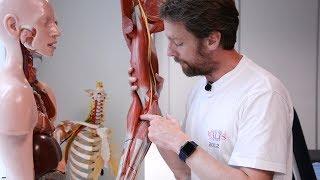 Arteries of the upper limb