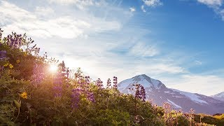 "Peaceful Relaxing Instrumental Music, Meditation Music ""Mountain Summer Meadow"" by Tim Janis"