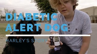 Diabetic Alert Dog Feature: Harley's Story