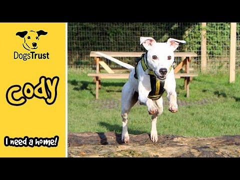 Meet Cody the Staffy Cross | Dogs Trust Darlington