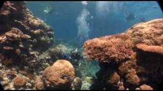 Silver Series - Dive and Snorkel Trips, Great Barrier Reef