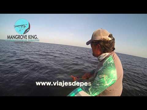 Un GRAN SABALO pescado por Juan A Pérez / viajesdepesca.mx