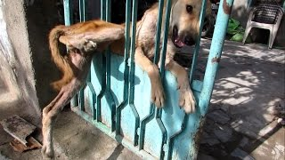 Desperate for help, trapped dog freed from gate
