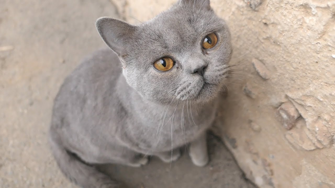 Gray cat meow and little puppies so hungry