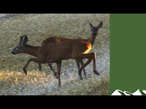 Roy calls bucks… and vermin