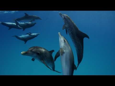 Requins VS Dauphins : comment les requins attaquent-ils les dauphins ?
