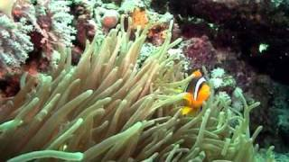 V globinah z Monstroso - Rdečemorski koralni grebeni 1.del