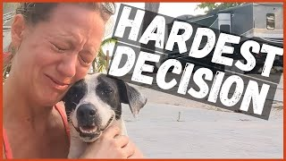 Can We Adopt a Dog in Mexico? An Emotional Dog Adoption and Pet Rescue Story