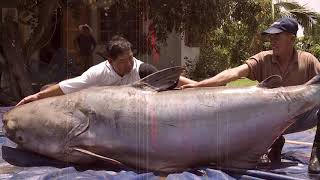 15 Biggest Fish Ever Caught