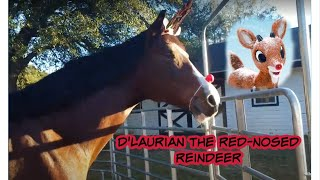 D'laurian the Red-Nosed Reindeer | EquiFilms Productions