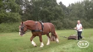 video of Filius