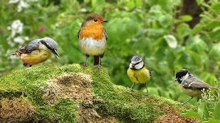 Videos for Cats to Watch - Spring Birds Spectacular