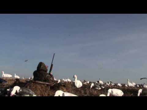 Snow Goose Hunting Manitoba with Michitoba Outfitting