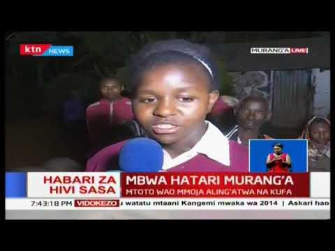 Mbwa hatari Murang'a: Familia ambayo mtoto wao wa darasa la nane aliuawa na mbwa