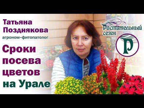 Сроки посева цветов на Урале. Советы агронома Татьяны Поздняковой