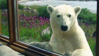 Growing Up with Polar Bears