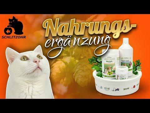 🔥Nahrungsergänzung für Katzen | AniForte | Supplements für Katzen | Ernährung optimieren