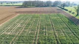 video: Climate change could boost British crops, pioneering field trial shows