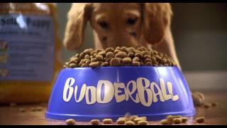 Air Buddies (2006) Video