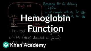 Hemoglobin moves O2 and CO2 | Human anatomy and physiology | Health & Medicine | Khan Academy