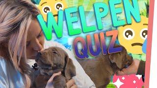 Zuckersüßes PUPPY Quiz!   Wer darf WELPEN kuscheln?   Kholo.pk
